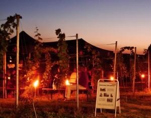 Abendstimmung beim Weinbergfest in Pesterwitz