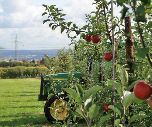 Apfelplantage Pesterwitz