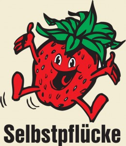 Selbstpflücke Erdbeeren Gut Pesterwitz bei Dresden