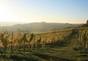 Straußenwirtschaft Pesterwitz, Herbst im Weinberg