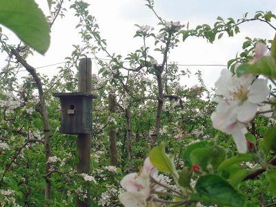 Betrachtungen zum Blütenrundgang