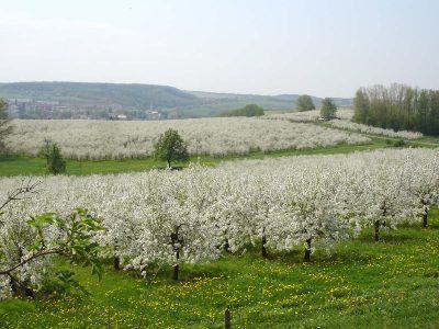 Pesterwitzer Ausblicke im Frühling