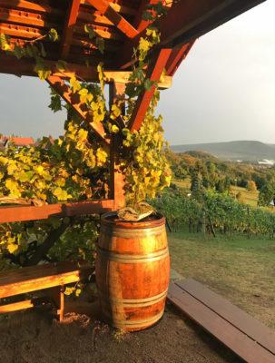 Herbstidyll im Weinberg