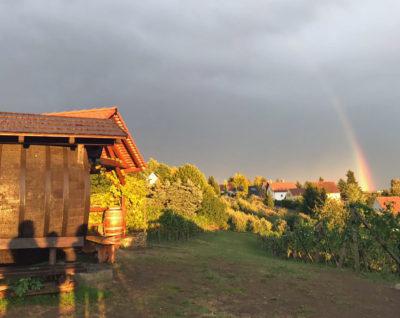 der Weinberg nach dem Regen