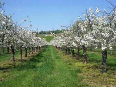 Blick zum Weinberg im Frühling
